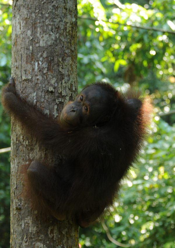 Products Free From Palm Oil